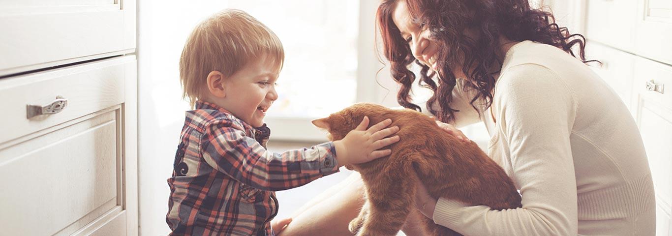 Aikuisen Kissan Rokottaminen
